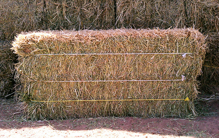 Dairy Quality Bales of Arizona Hay