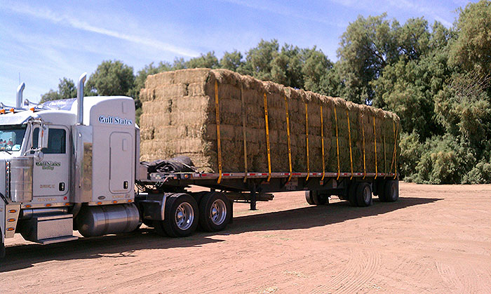 Semi-Loads of Arizona Hay